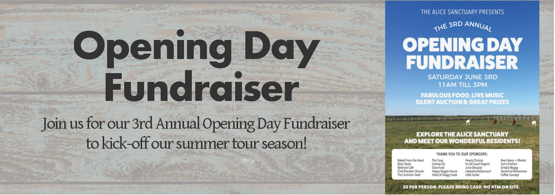 Opening Day Fundraiser