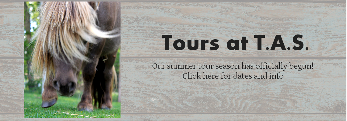 Tours at T.A.S.